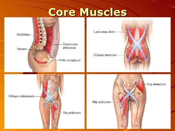 Anatomy-Core-Muscles