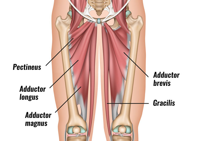groin-muscles700